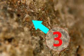 Texture comparative n 20-3-3 meteorite-mars.com meteorite chizé de mars